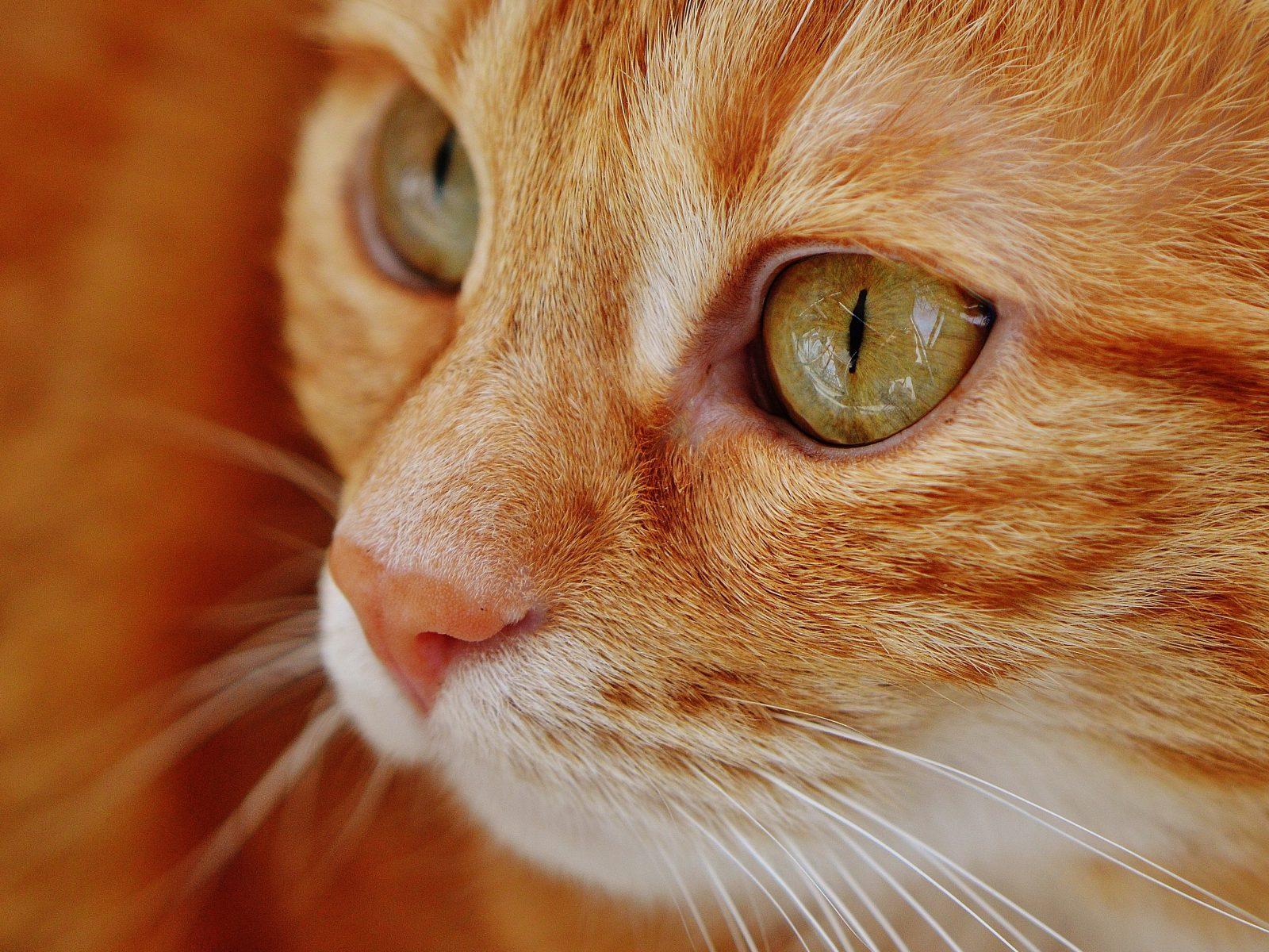 Singam 3 Hd Wallpaper Cat Eyes Wallpaper 4k Hd Wallpaper Background