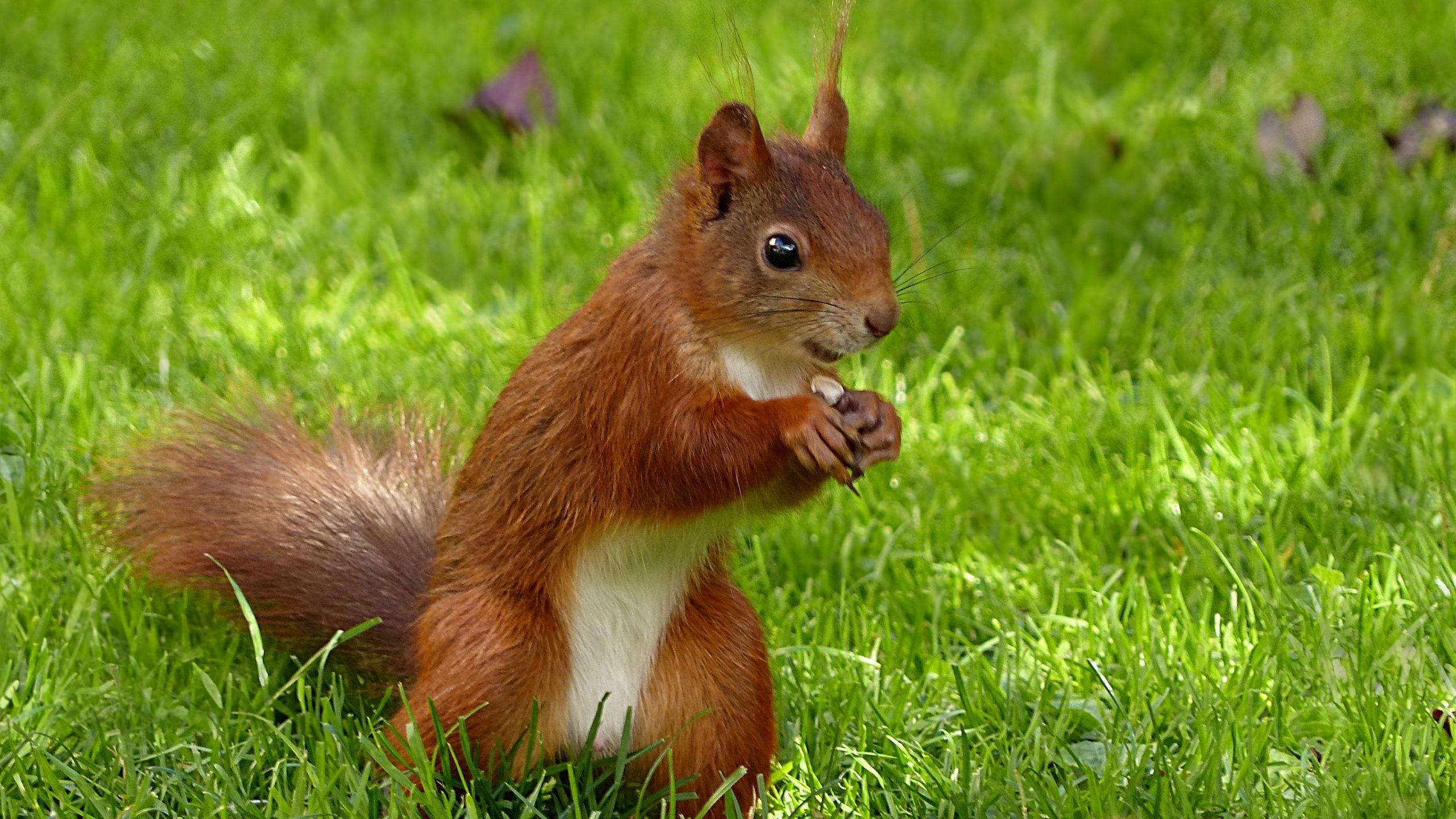 Fall Tree Desktop Wallpaper Squirrel Wallpaper Hd Wallpaper Background