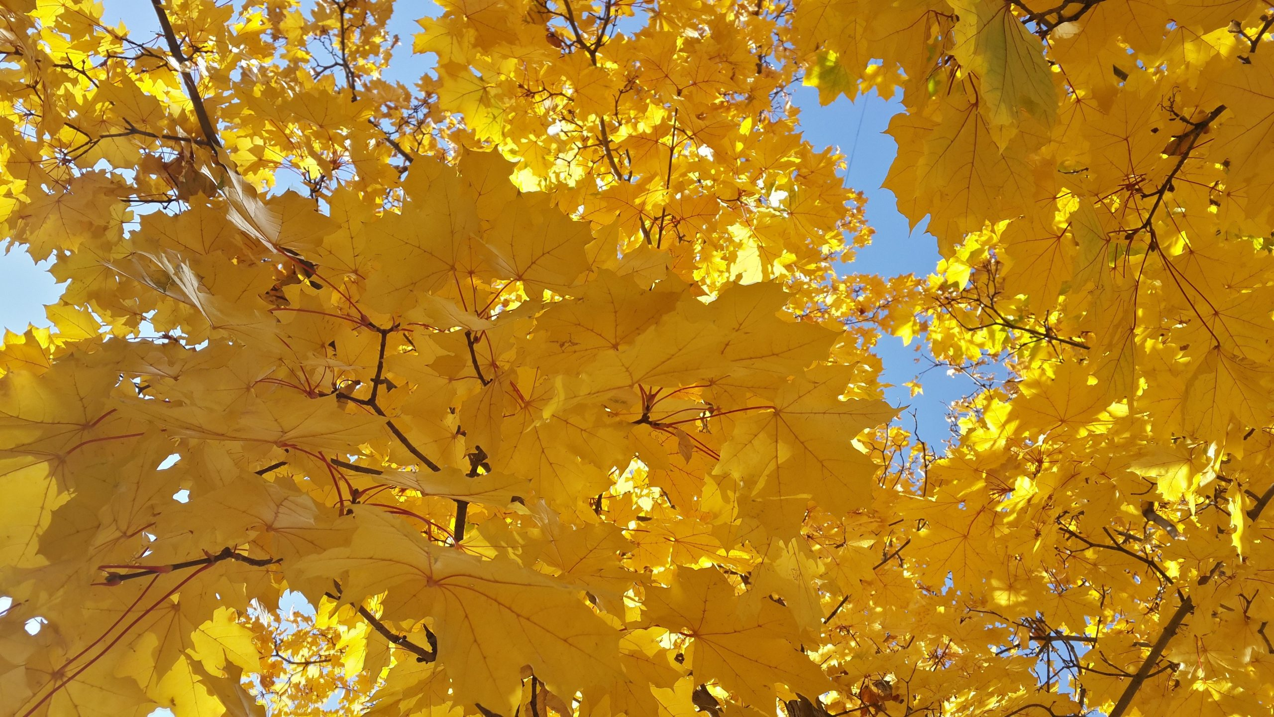 Spring Iphone 6 Wallpaper Yellow Leaves Wallpaper 4k Background Hd Wallpaper