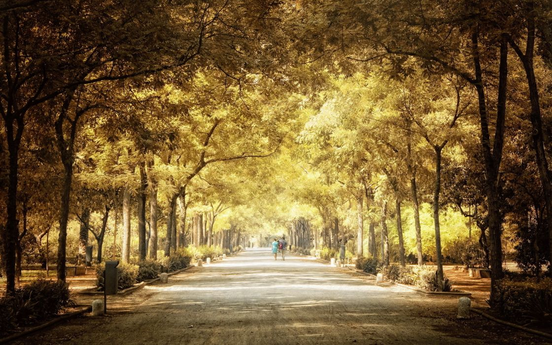 Cozy Fall Hd Wallpaper Nature Trees Parks People Pathways Scenic Wallpaper