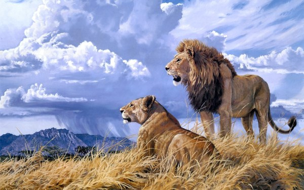 animals cats lion painting art