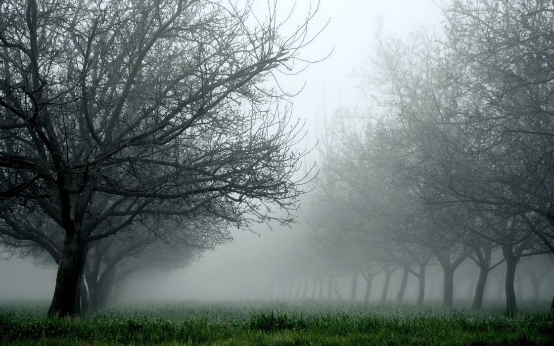 Gloomy Fall Wallpaper Nature Landscapes Trees Orchard Fields Grass Fog Mist Haze
