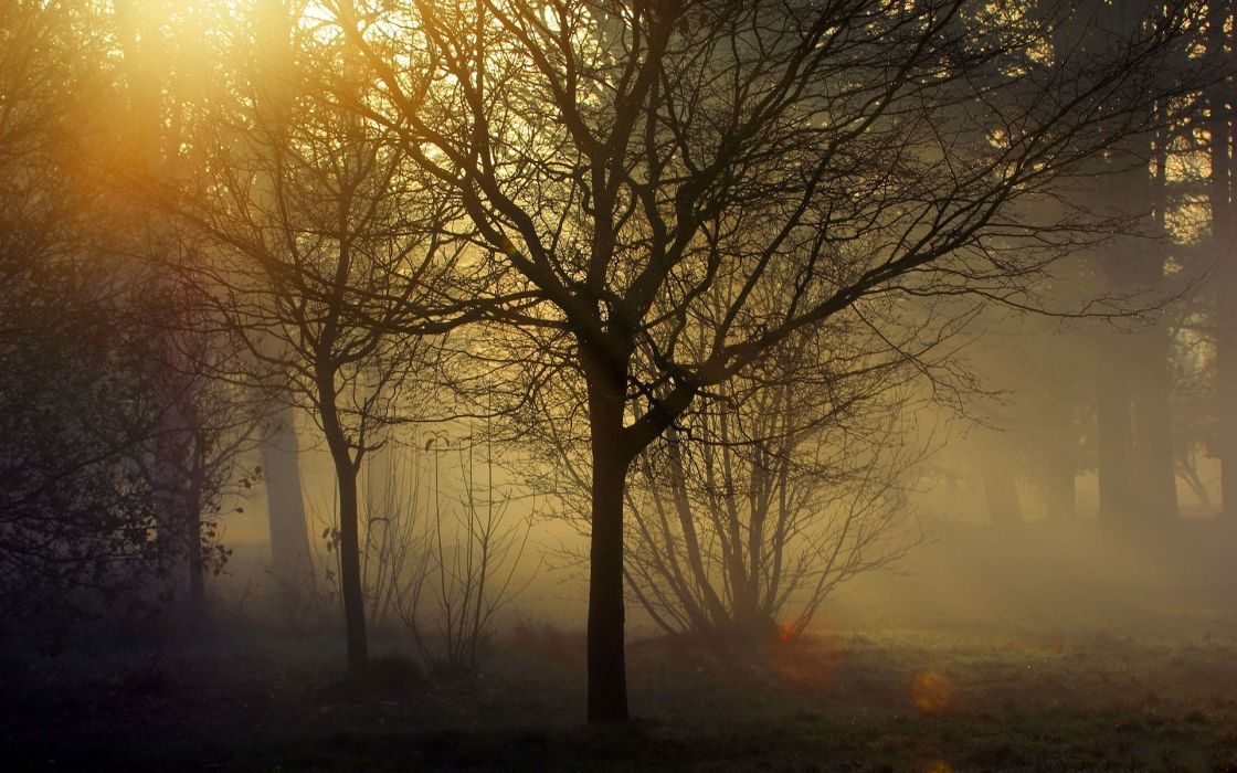 Fall Woodsy Pc Wallpaper 1 Landscapes Trees Forest Woods Sunlight Filtered Fog Mist