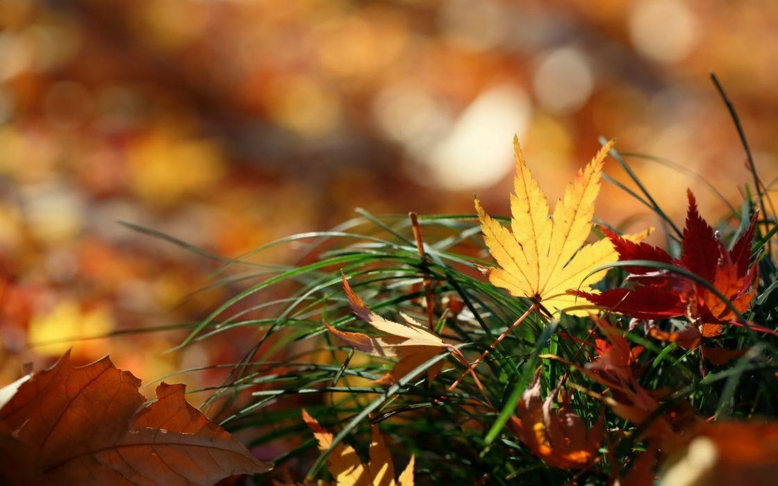 Fall Nature Wallpaper Free Nature Leaves Autumn Fall Macro Grass Wallpaper