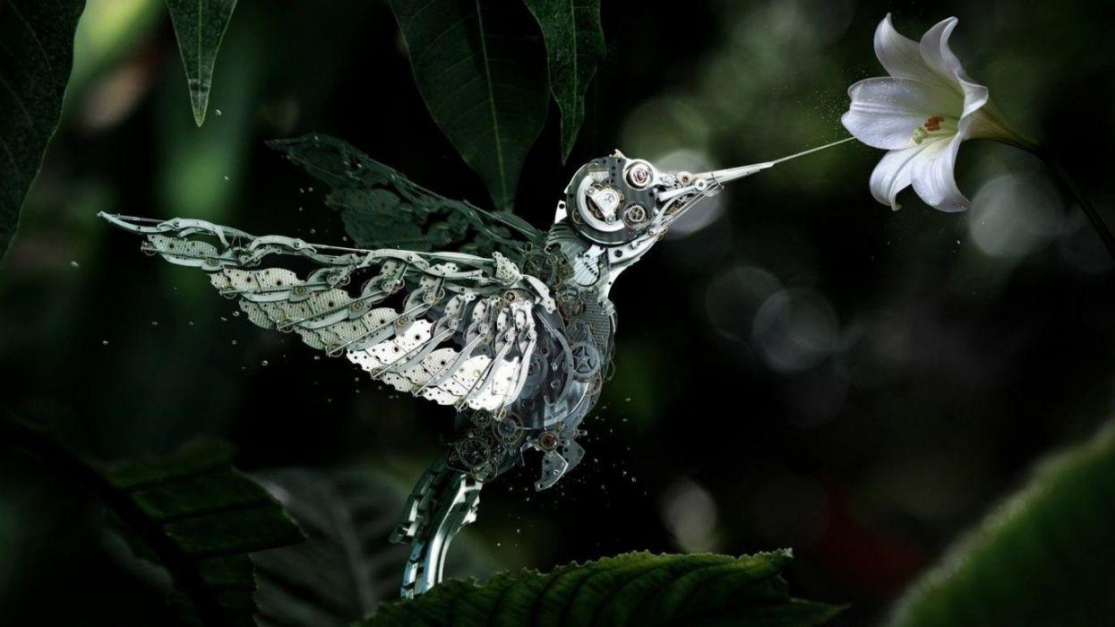 Flowers Steampunk Widescreen Hummingbird Wallpaper