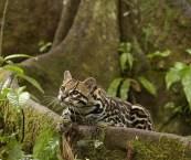 Rainforest Animals Wallpapers
