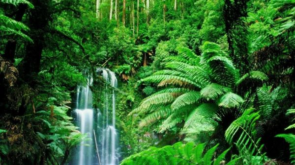 green landscapes trees jungle forest