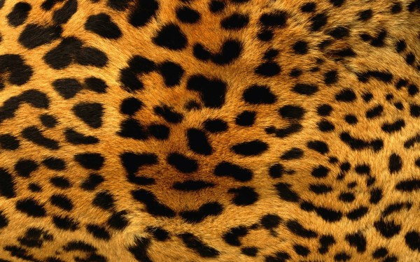 Animals Patterns Fur Leopard Print Wallpaper 2560x1600