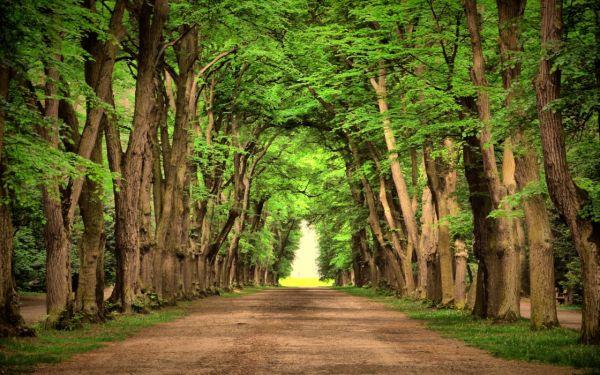 road green trees beautiful landscape