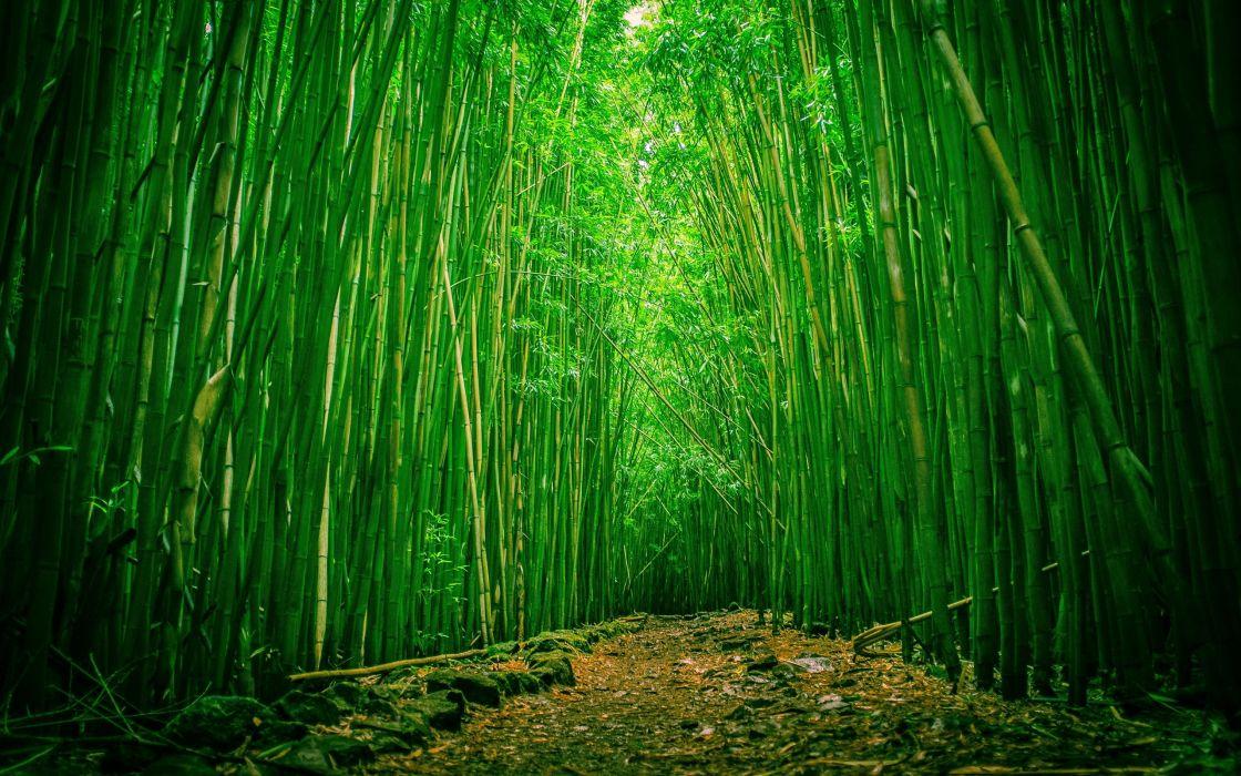 bamboo forest wallpaper 2560x1600