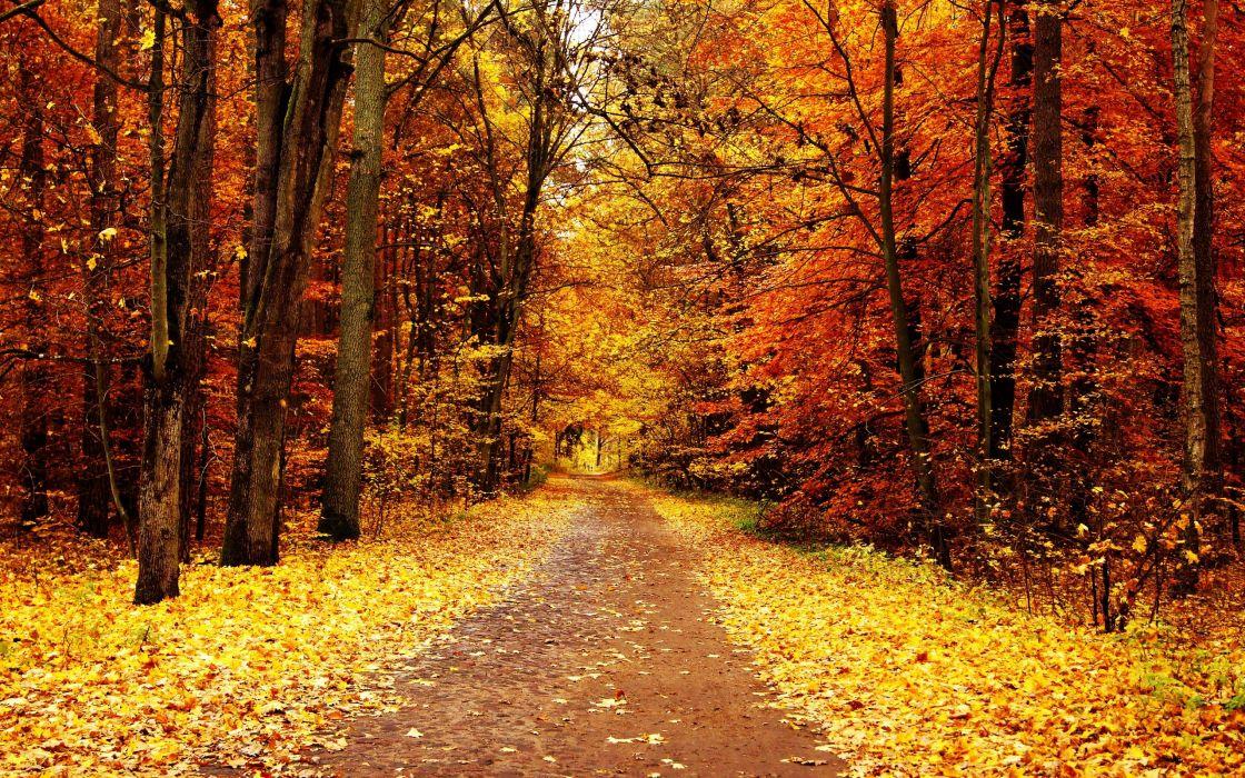 color autumn trees park