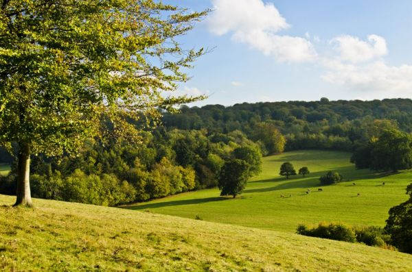 field hills trees landscape autumn