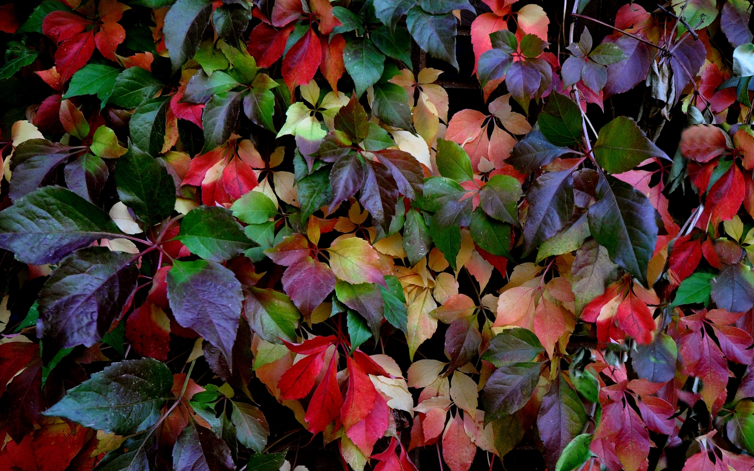 Frosty Fall Leaves Wallpaper Leaves Colorful Autumn Wallpaper 2560x1600 162844