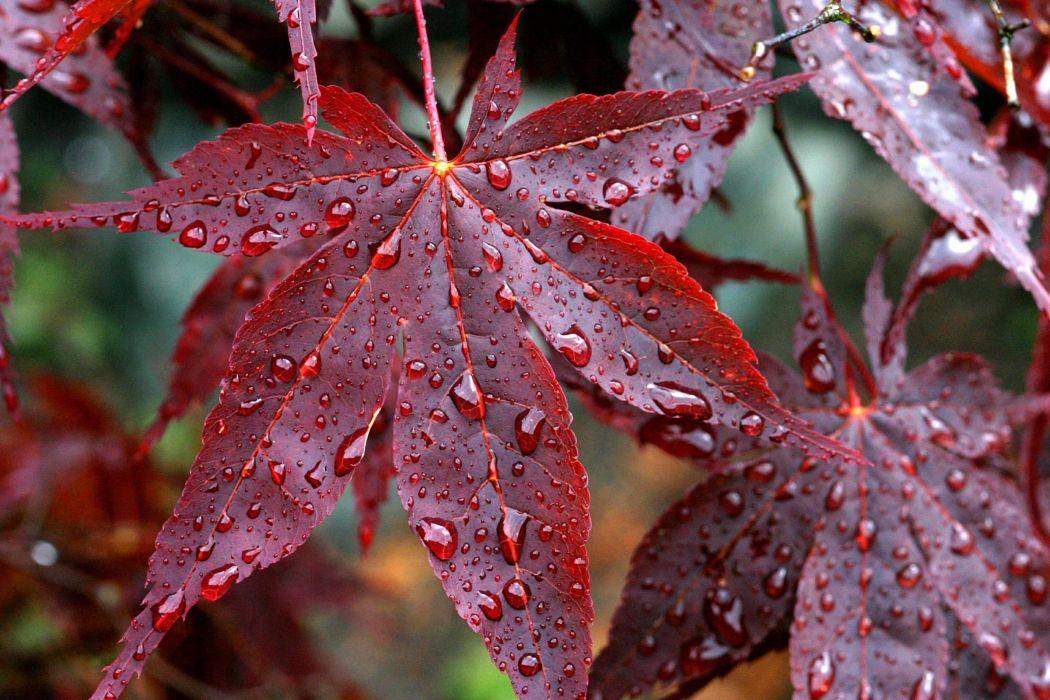 Vector Wallpaper Fall Colors Drops Rain Veins Red Autumn Leaves Wallpaper 2400x1600