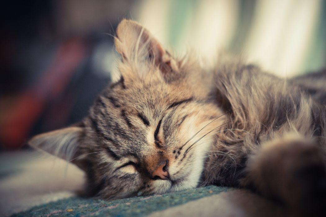 Cute Sleeping Kitten Wallpaper Kitten Sleeping Cat Small Wallpaper 2048x1365 174989