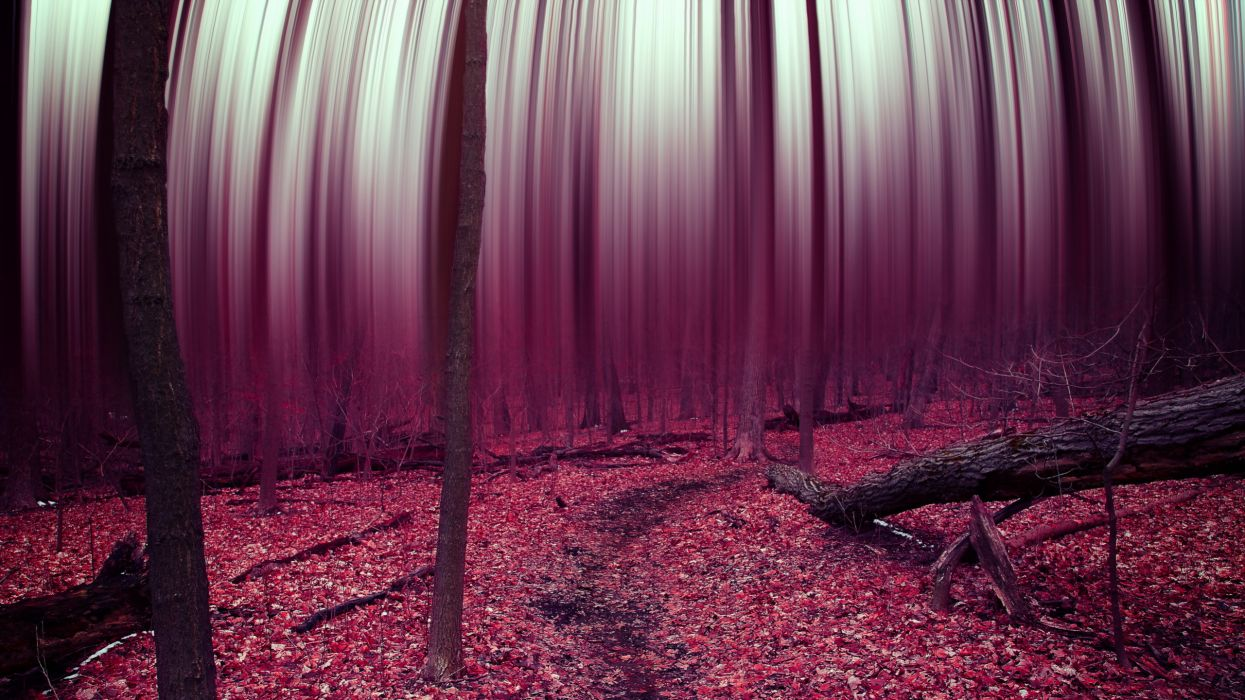 Psychedelic Wallpaper Hd Forest Abstract Trees Leaves Autumn Surreal Psychedelic F