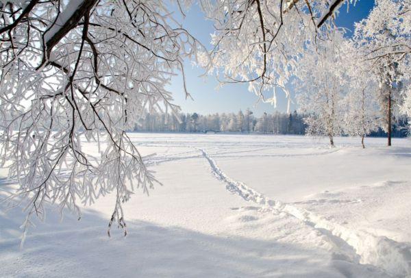 trees winter ice landscape nature