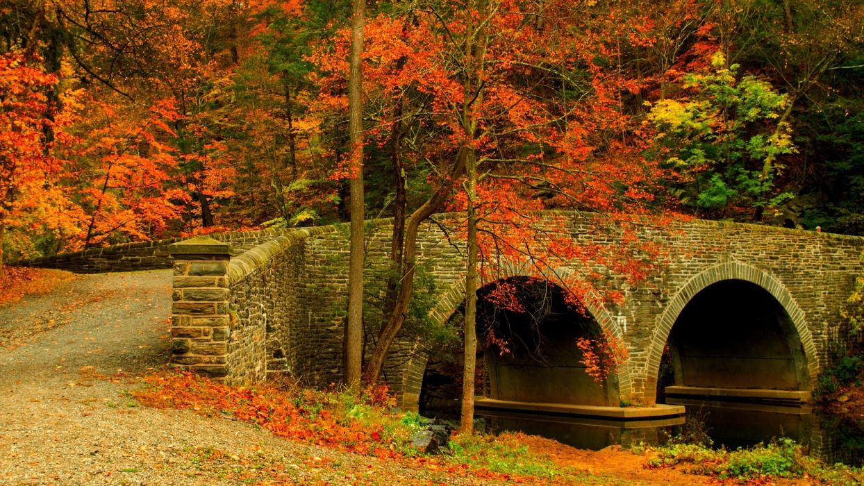 Fall Leaves Pathway Computer Wallpaper Nature Road Leaves Trees Forest Park Bridge Colorful Path