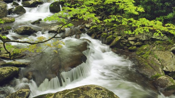 Landscapes Nature Spring Tennessee National Park Great Smoky Mountains Wallpaper 1920x1080