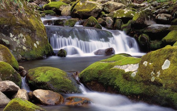 Landscapes Nature Rocks Tennessee Moss Forks Great Smoky Mountains Wallpaper 1680x1050