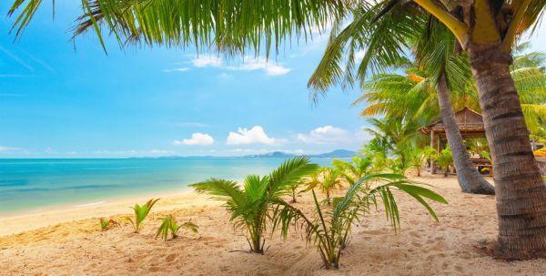 sand sea sky palm trees nature