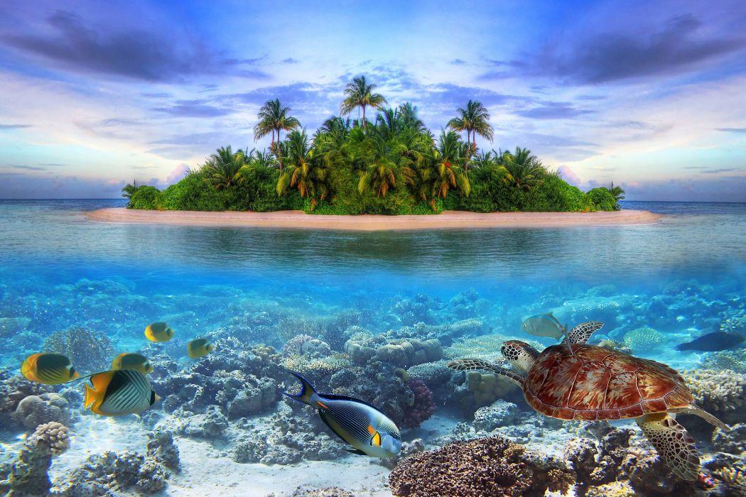 Sahil 3d Wallpaper Marine Life On A Tropical Island In The Maldives Ocean Sea