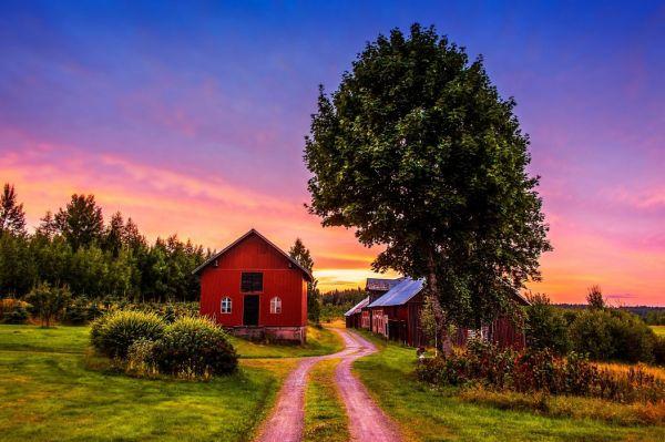 sunset trees road home landscape