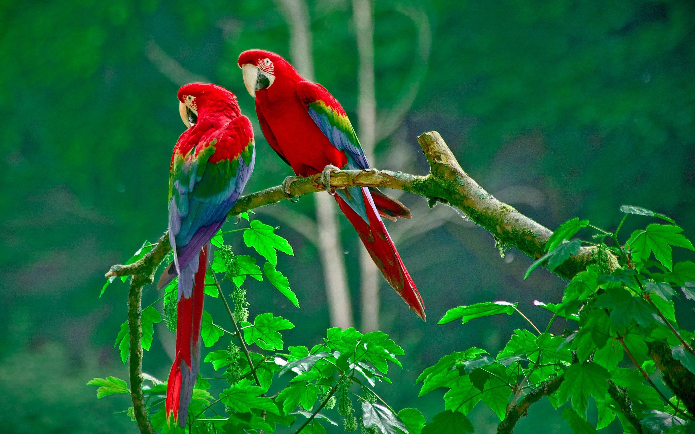 macaw parrot bird tropical (78) wallpaper | 2880x1800 | 362895