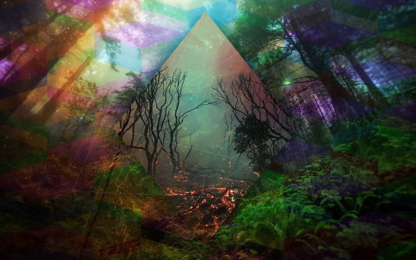 Trippy Wallpaper Psychedelic Forest