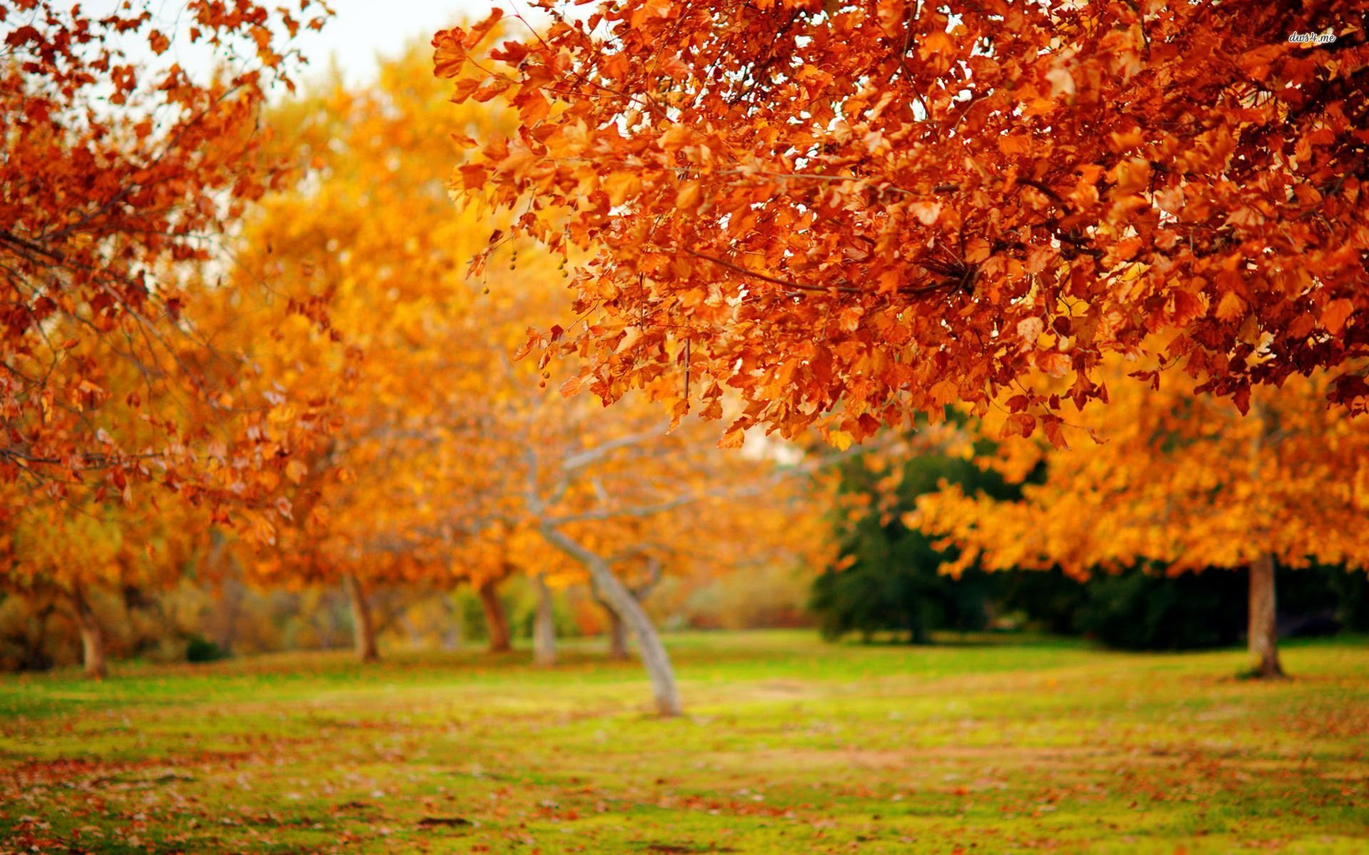 Free Desktop Wallpaper Fall Foliage Autum Trees Nature Landscape Leaf Leaves Wallpaper