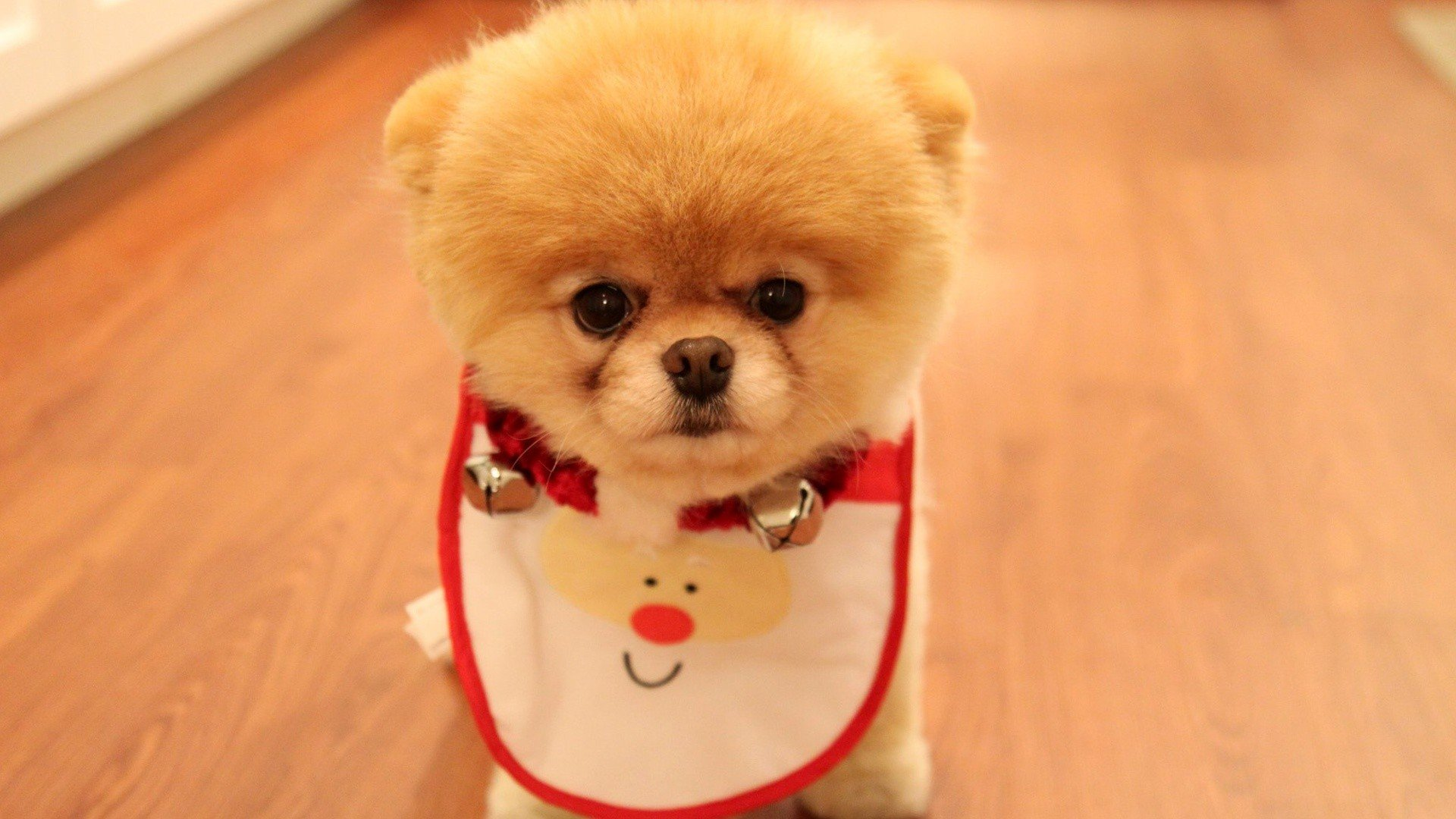 Cute Puppy Wallpapers Downloads Download Wallpapers Dogs Chow Chow