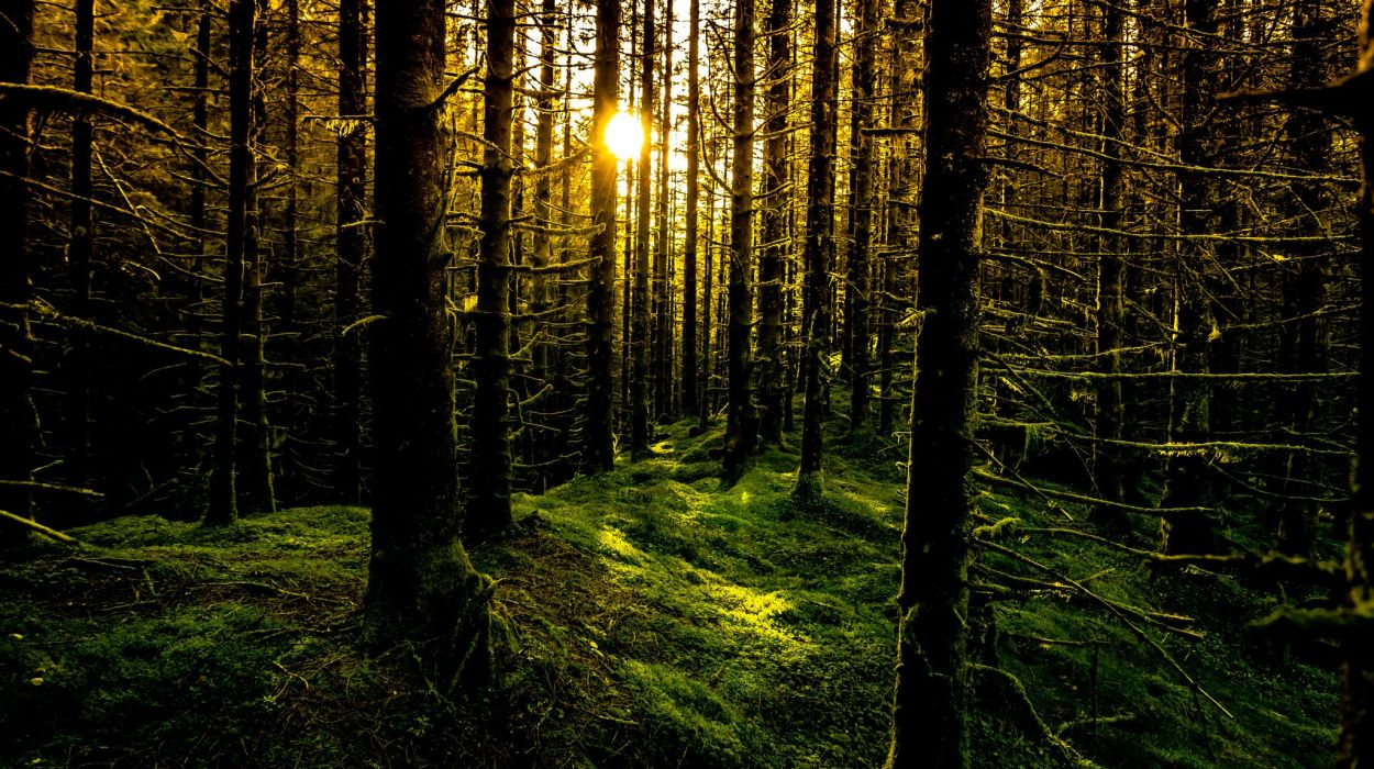 Sad Wallpaper Free Download Hd Rays Sun Forest Moss Trees Norway Bergen Wallpaper