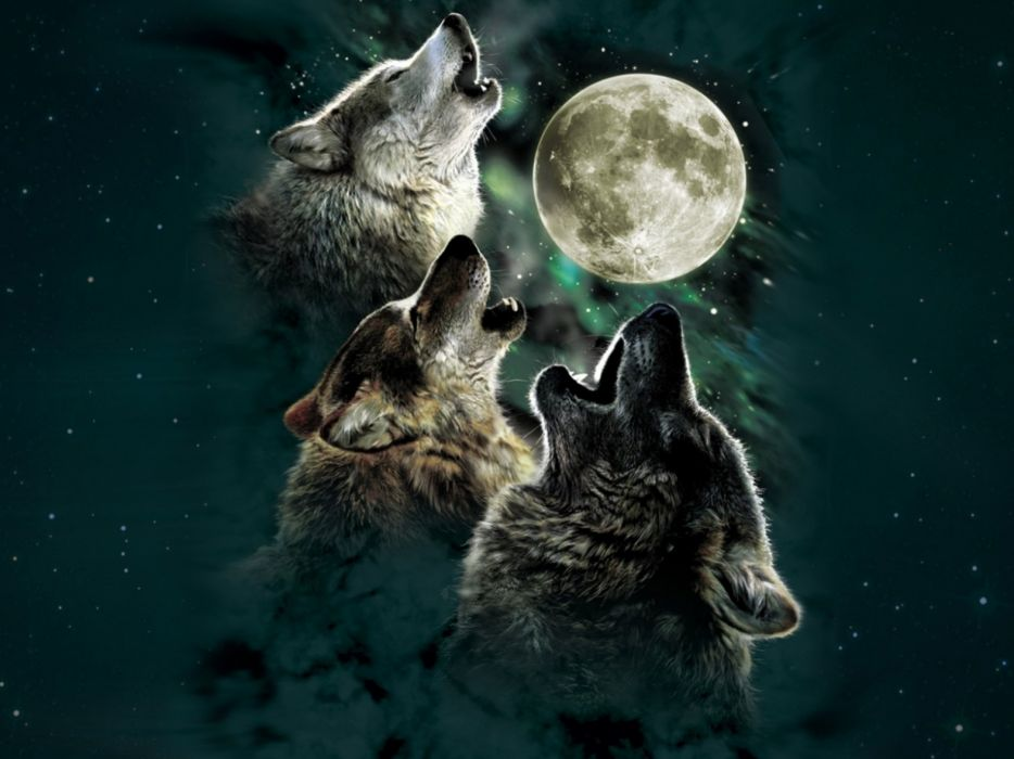 Wolf wolves predator carnivore night moon stars howl artwork f wallpaper  1920x1440  649361