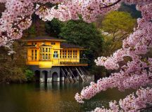 Spring flower tree beauty lake house landscape wallpaper ...