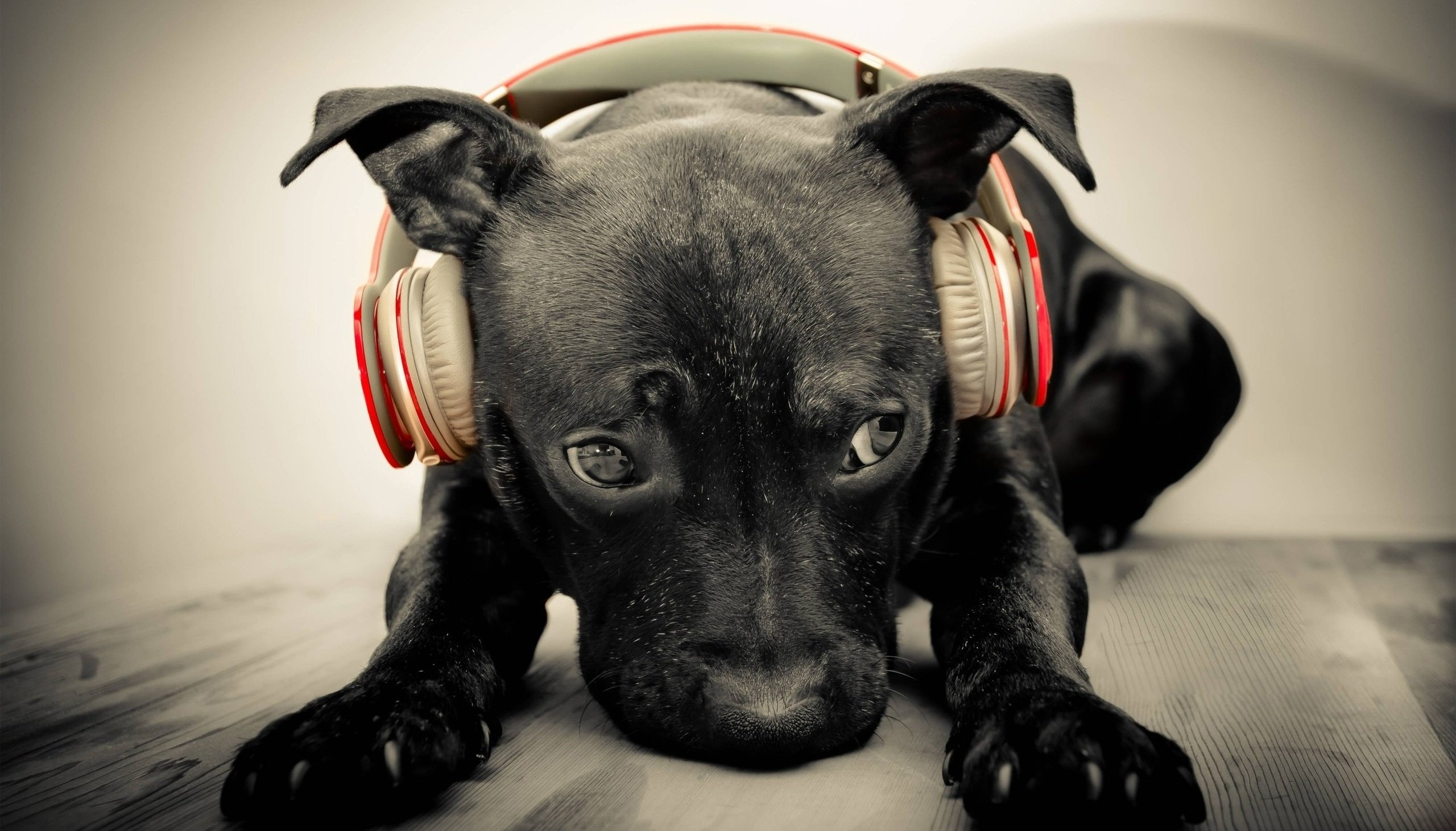 Image result for dog headphone