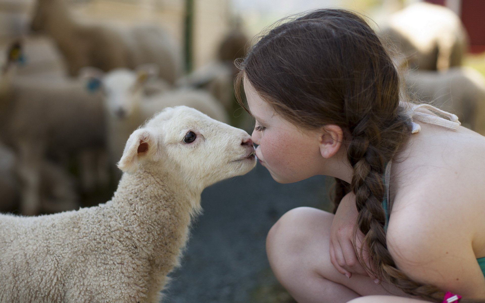 Small Cute Baby Kissing Wallpaper Child Sheep Lamb Kissing Affection Feeling Animal Love