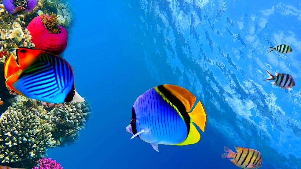 Hd Wallpaper Pc Peces Arrecife Colores Animales Wallpaper 1920x1080