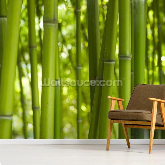 bamboo trees wallpaper mural