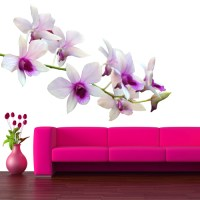 Wallstickers folies : Orchid Wall Stickers