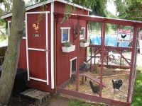 Chicken Coop and Urban Farm Tour Today