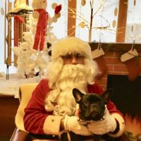 Annual Santa Paws Event Sunday 10am – 3pm