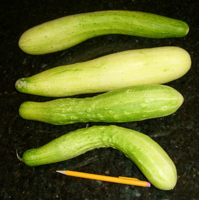 Cucumber  Not Turning Green  Walter Reeves The Georgia