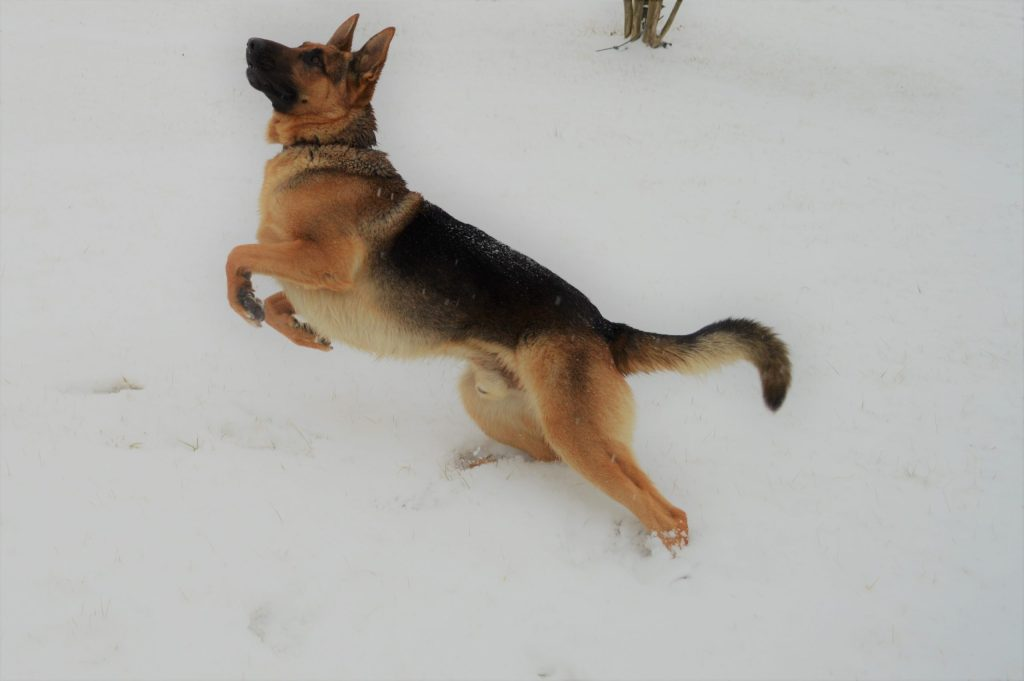 LUTHER CATCHING IN SNOW