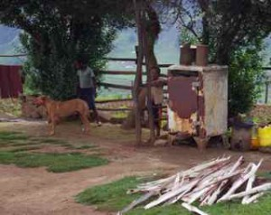 One of Mbali Ndlovu's cousins plays in the yard.