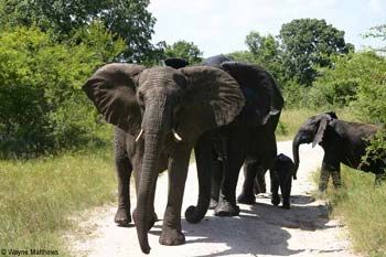 elephant_on_road