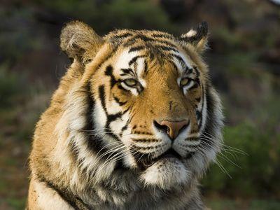 Seatao, Julie's mate, at Tiger Canyons, South Africa. Photo Daryl and Sharna Balfour.