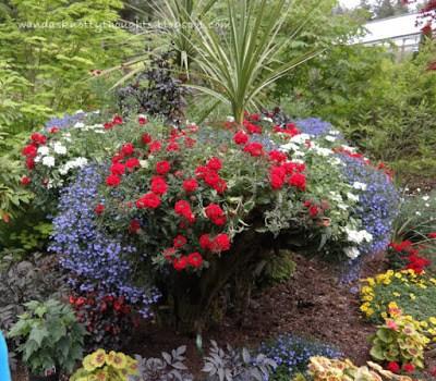 Flowers in Glacier Gardens, Juneau, Alaska   wandasknottythoughts.com