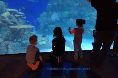 A visit to the Denver Downtown Aquarium on wandasknottythoughts.com