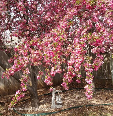 Blooming crab apple tree and statue wandasknottythoughts.blogspot.com