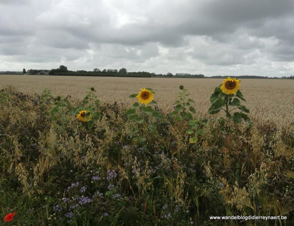 25 juli 2017: Sint Anna ter Muiden (Nl) - Knokke (24 km)